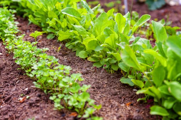 Jardin de salade
